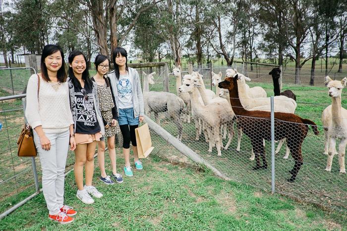 alpaca-bilpin-018