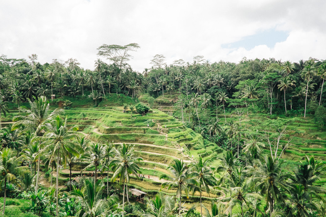 ubud-tegallalang-rice-fields-01