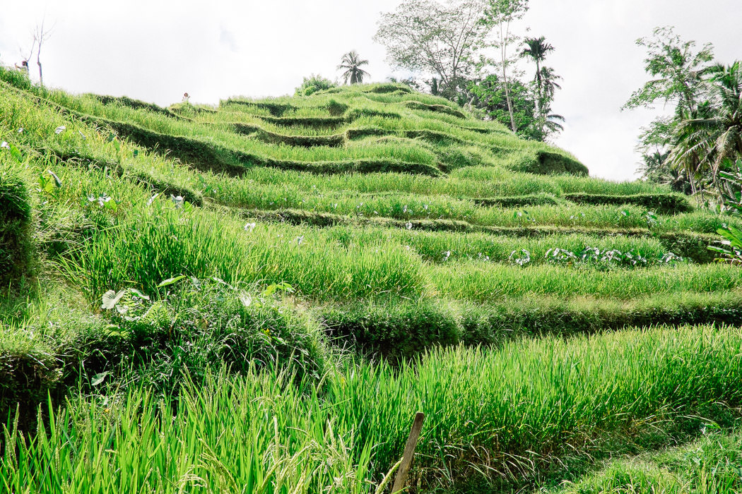 ubud-tegallalang-rice-fields-06