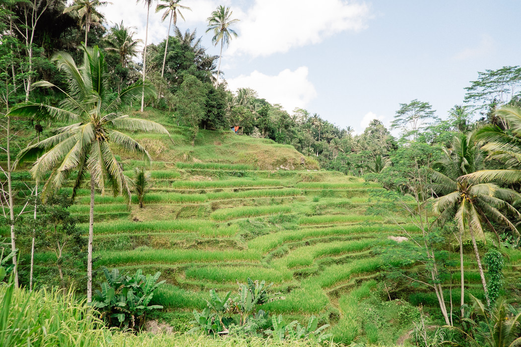 ubud-tegallalang-rice-fields-15