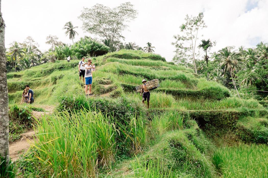 ubud-tegallalang-rice-fields-17