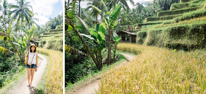 ubud-tegallang-rice-fields-003