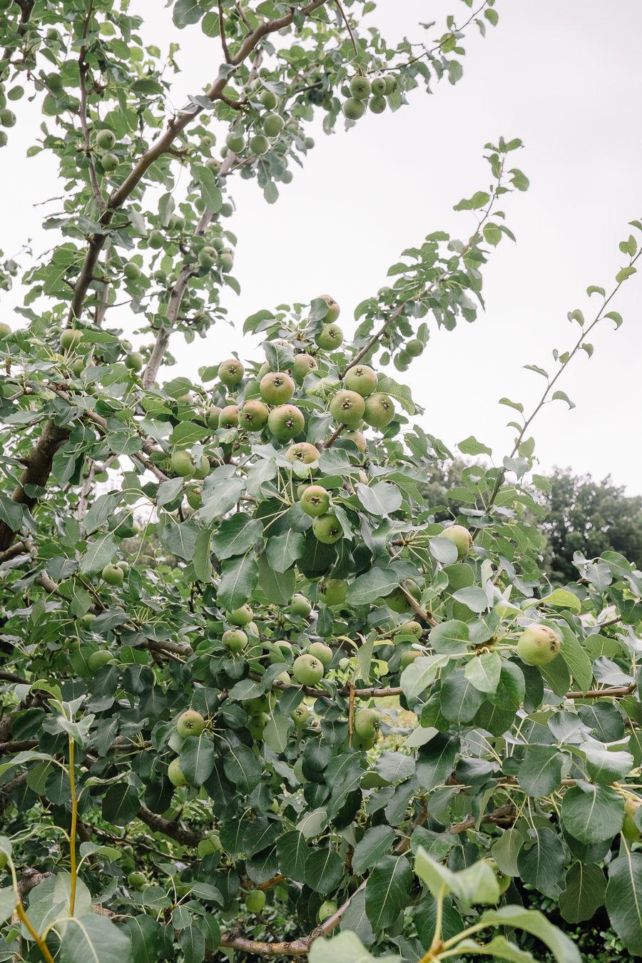 clarissalum-boboli-gardens-florence-0011